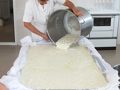 Млекара у Новом Брду почела са радом
