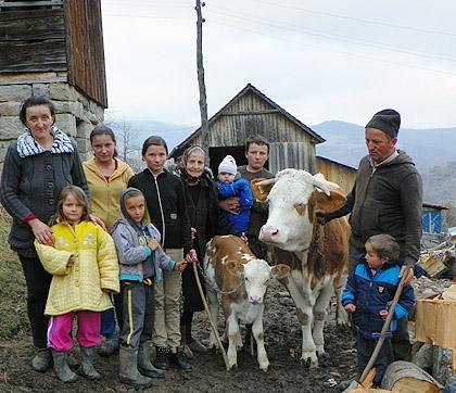 Крава и теле за Костовиће из Н. Пазара
