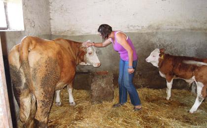 Купљена крава за породицу Гојковић