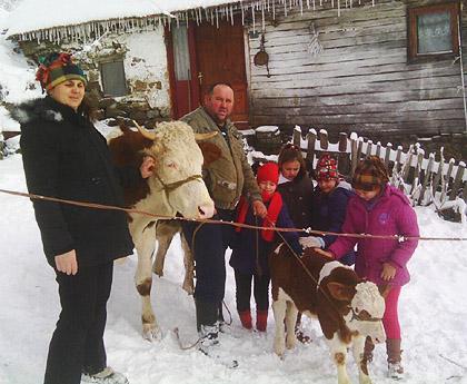Крава и теле за Костиће са Рогозне