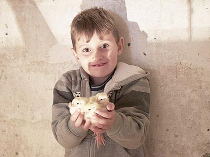 Породица Шукунда добила 200 пилића